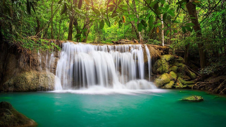 Shamanic Jungle Cleanse