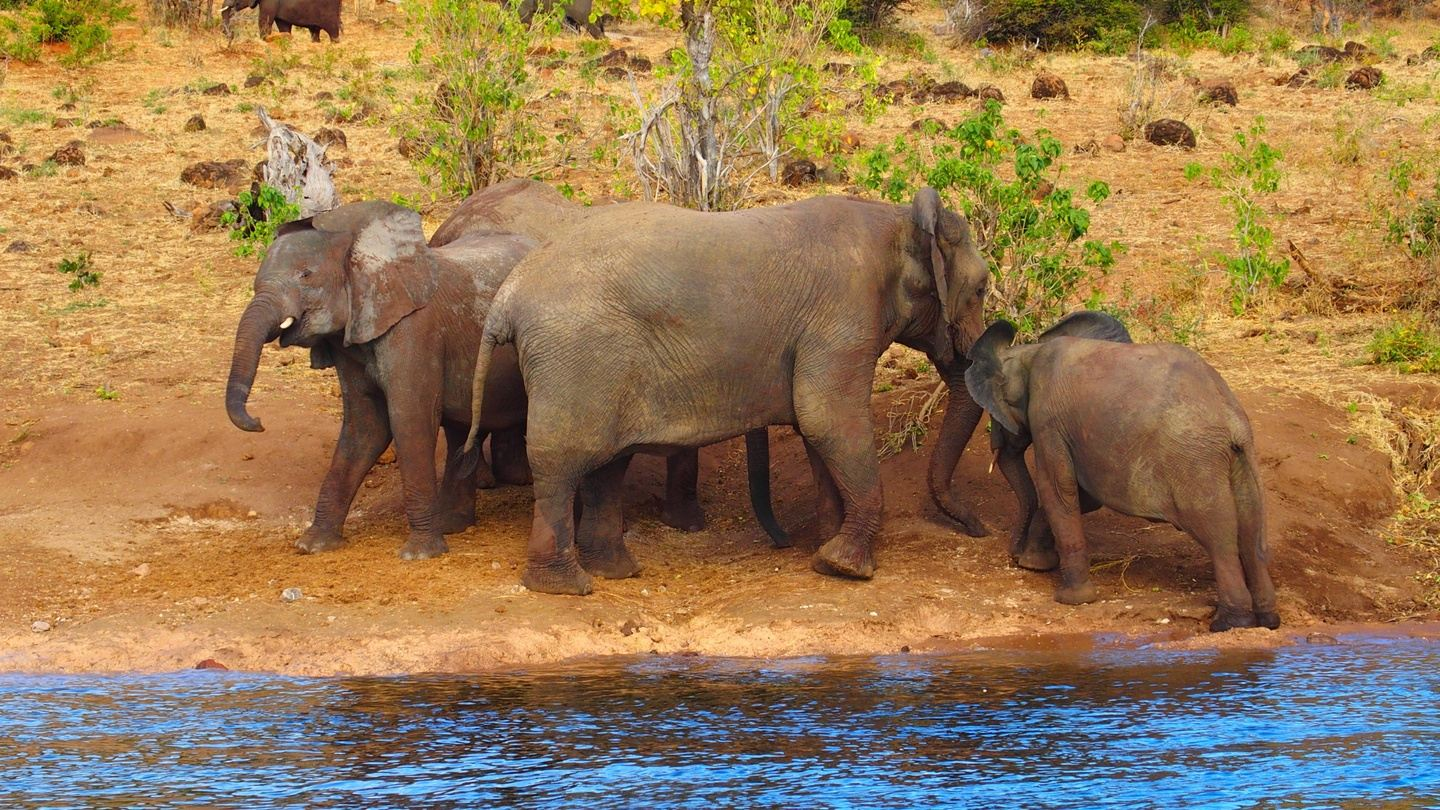 victoria falls tour ,Game Drive, Rhino Walk tracking /Accommodation