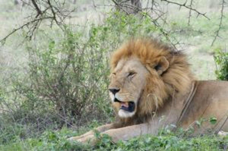 3 Days Comping Safari