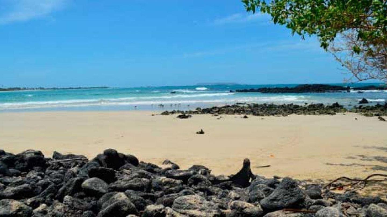 Galápagos Santa Cruz with Full Day Island 5D/4N