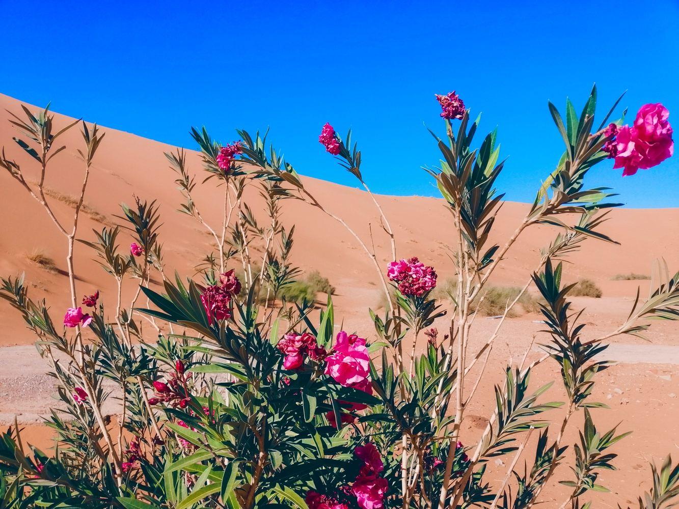 Best Morocco Desert Tours from Marrakech to Fez via Merzouga desert