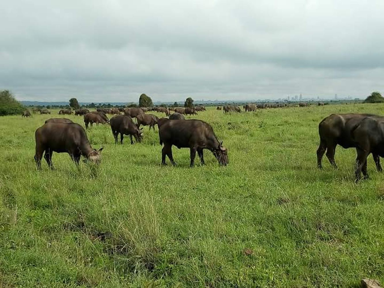 Masai mara budget safaris