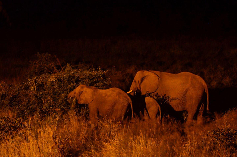 Ofroad trip and Safaris