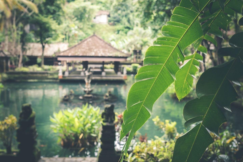 Detox Retreat Sophie Jones, Bali