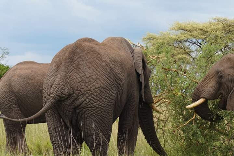 Tanzania Five Days SafariManyara, Tarangire, Serengeti and Ngorongoro