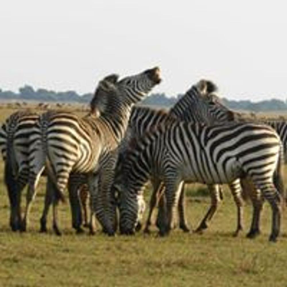 Game Drive and Rhino Walk Safari