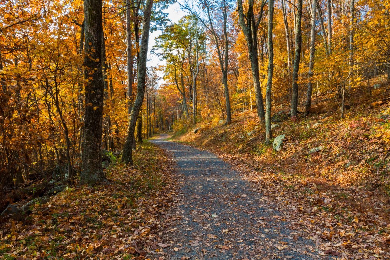 USA: Shenandoah Valley Experience 2021