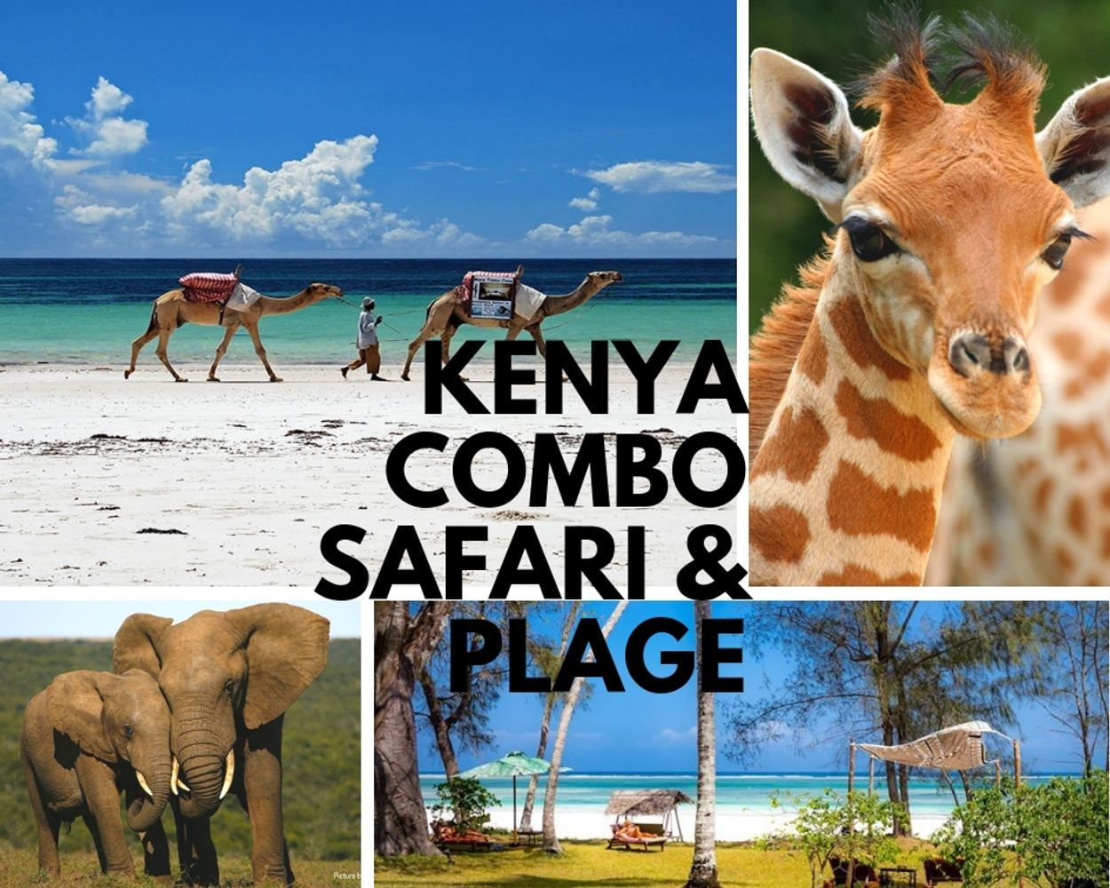 Kenya entre Safari et Plage!