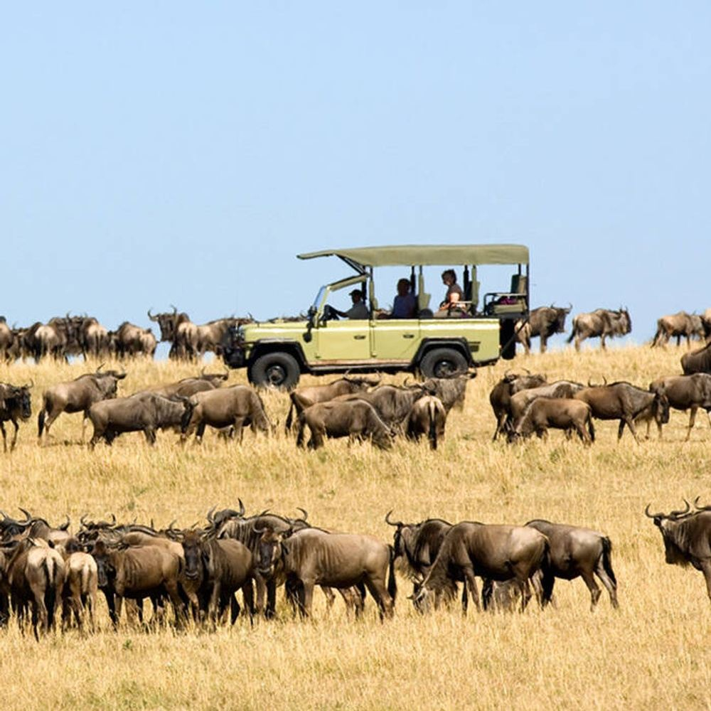SERENGETI MIGRATION FLY IN DRIVE OUT CALVING SEASON