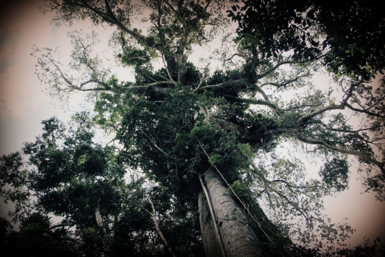 September 19 Ayahuasca Retreat