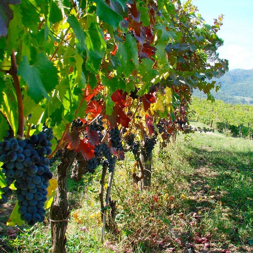 Wine & Wandering in Tuscany Tour