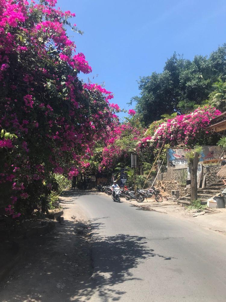 Bali Jungle Retreat