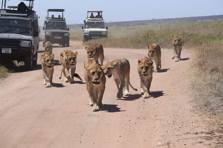 4days serengeti, ngorongoro crater & tarangire budget camping safari