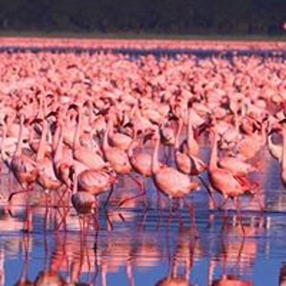 4 Days Lake Nakuru/Masai Mara Group Safari