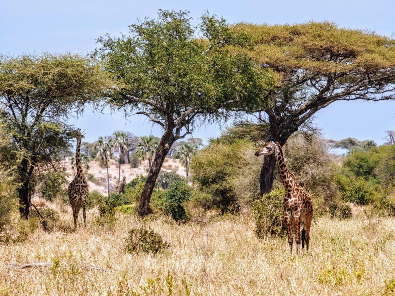 4 Days Tarangire, Serengeti & Ngorongoro Crater