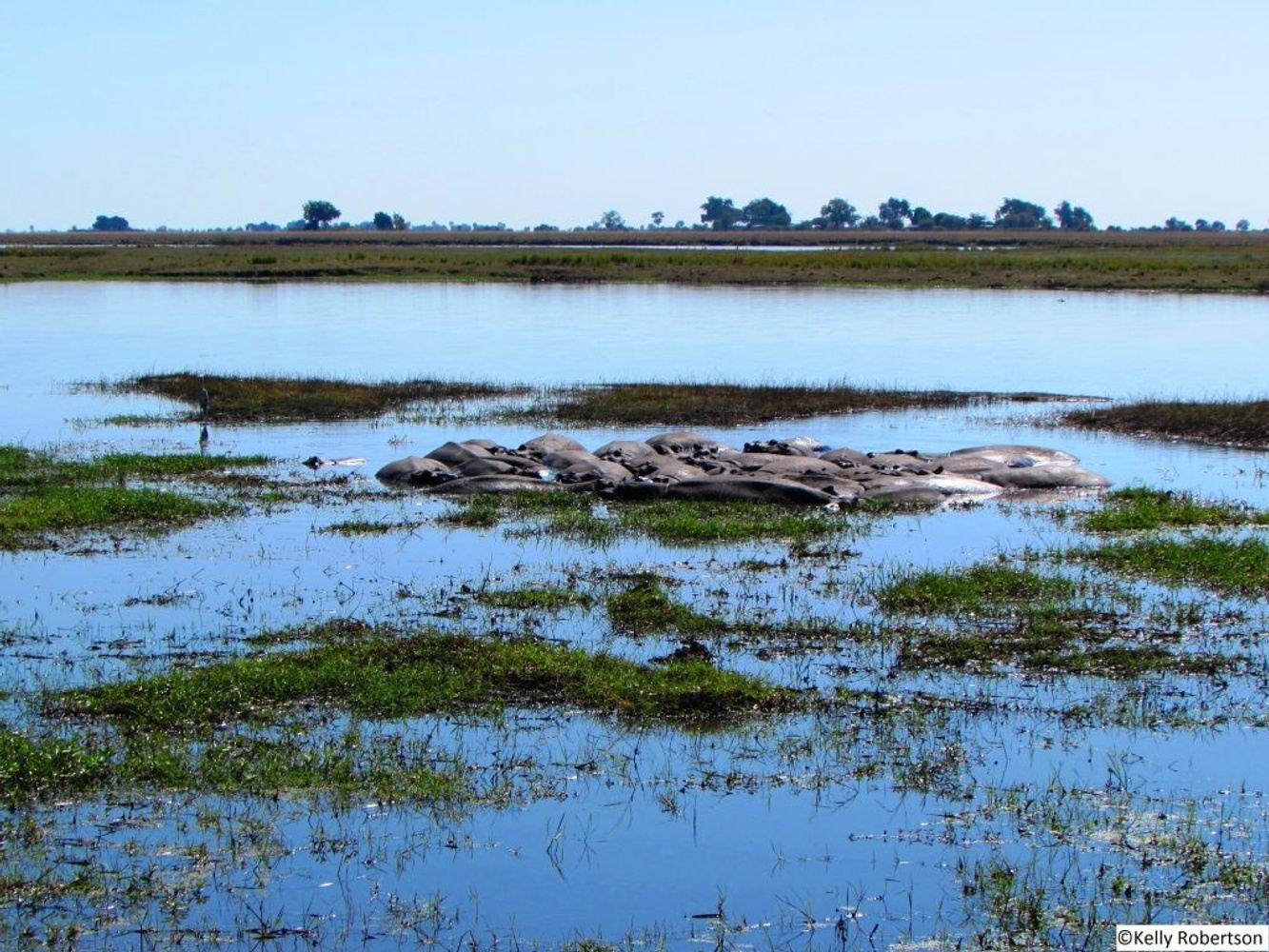 Victoria Falls, Chobe, Salt Pans & Okavango Delta