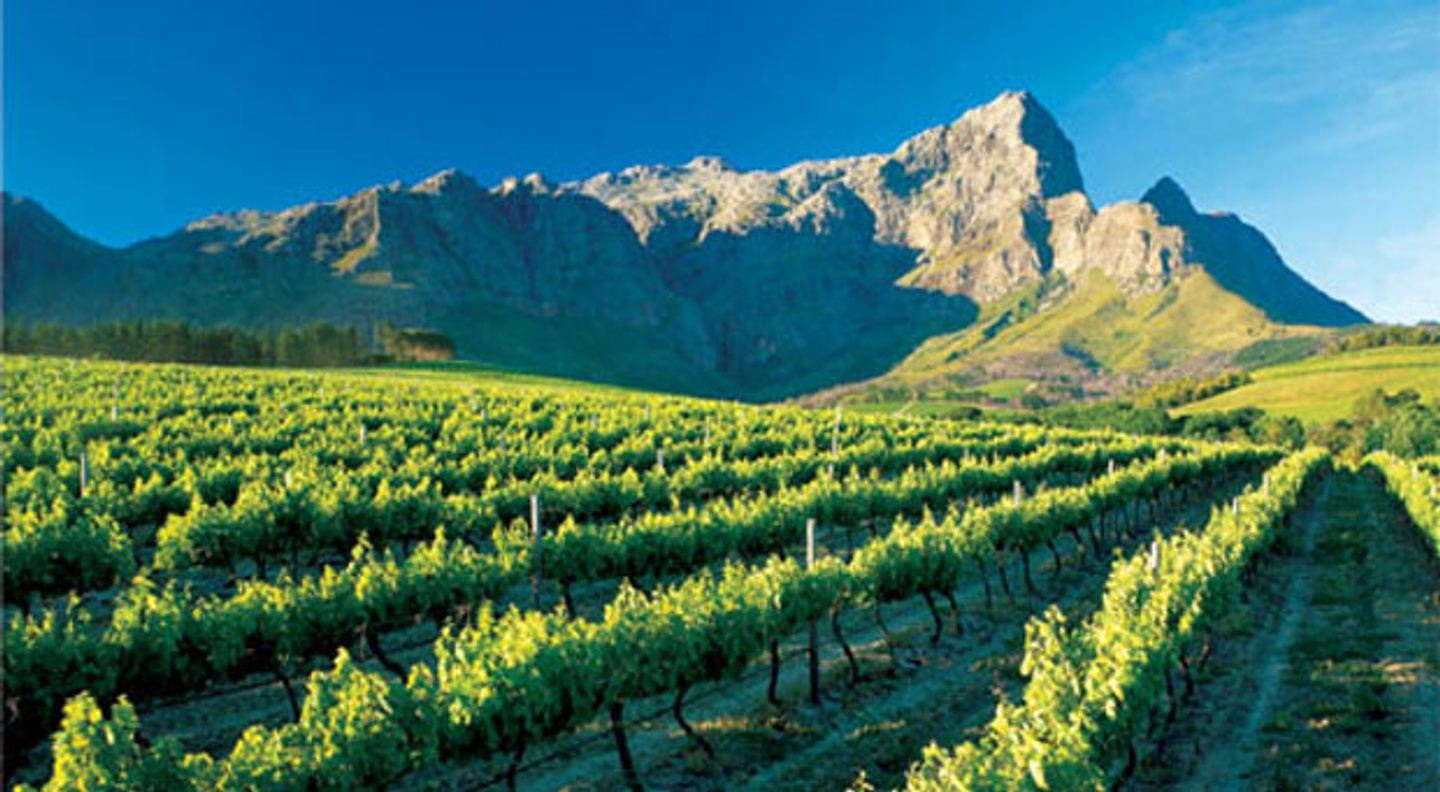 Full day Cape Winelands trike tour.
