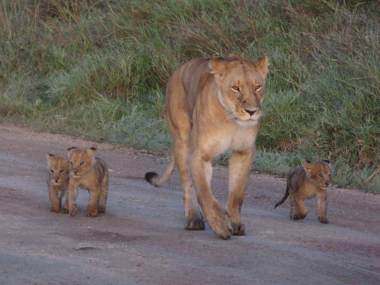 4-Days Maasai Mara and Lake Nakuru National Park