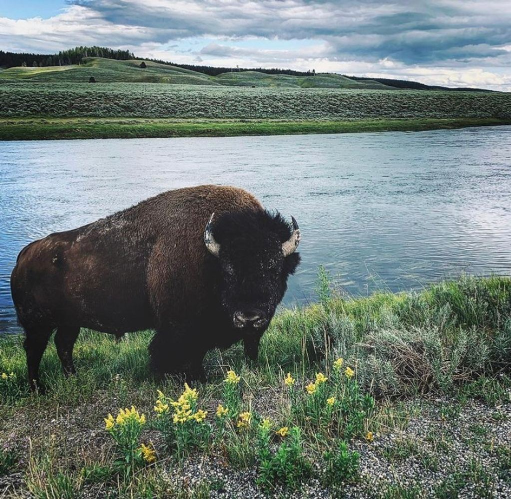 Tetons Wilderness Retreat