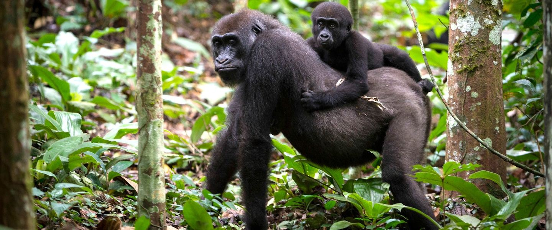 4 Day Gorilla Trekking Tour in Volcanoes National Park, Rwanda