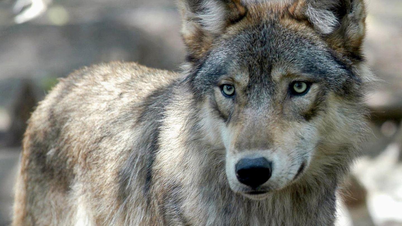 Wolves of War Muay Thai Retreat