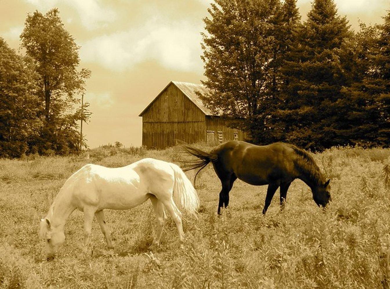 Being - Landscape, Horses, Community -  A Meditation Practice