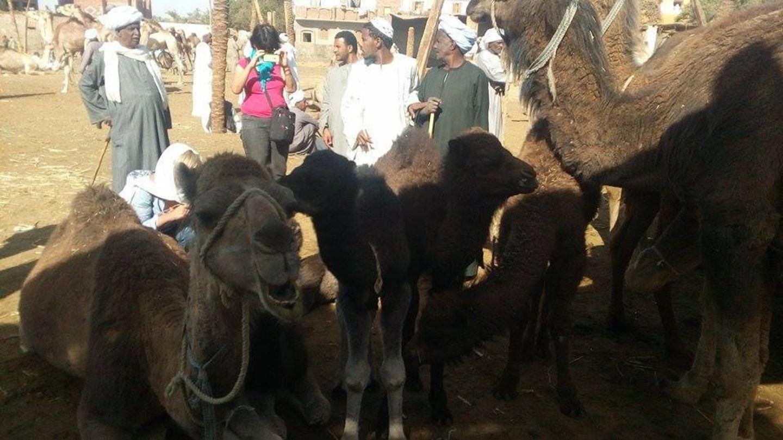 Camel Market at Darraw