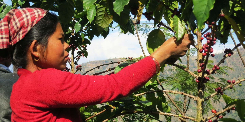 COFFEE ORIGIN TRIP IN THE HIMALAYAS