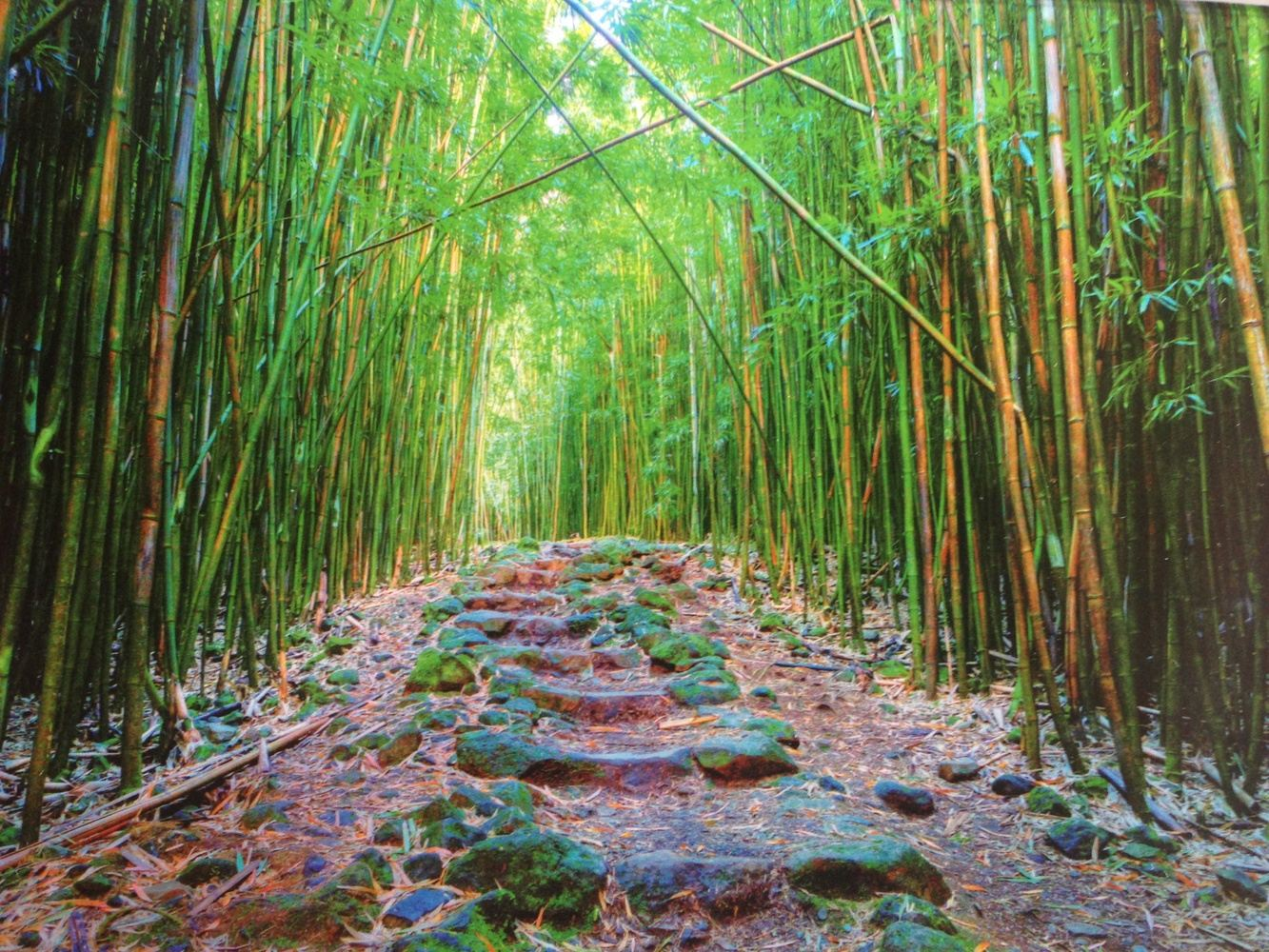 You're Invited to a Maui Yoga and Art Retreat !