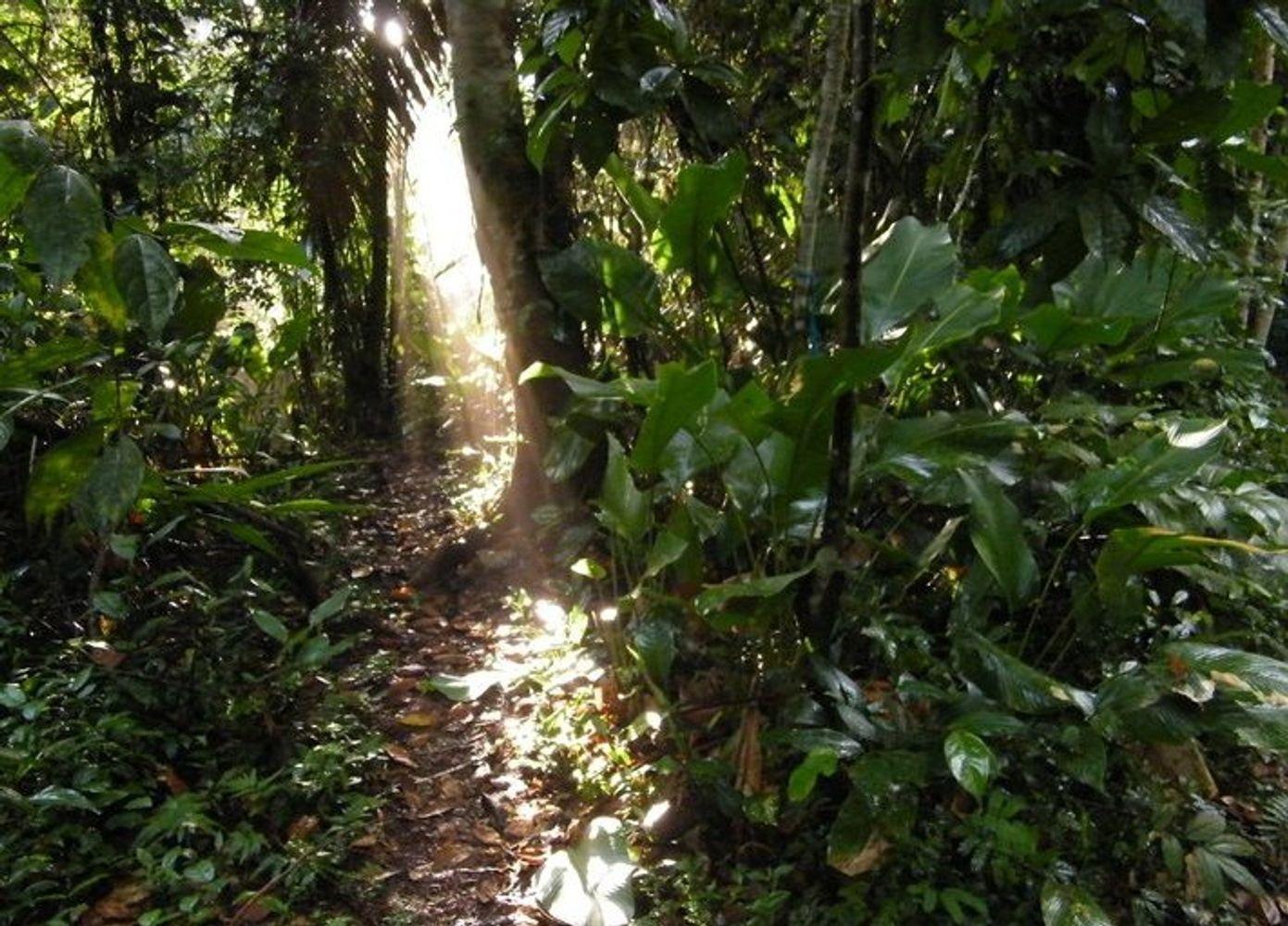 BFREE in Belize: Yoga, Cacao, & Adventure Eco-Retreat