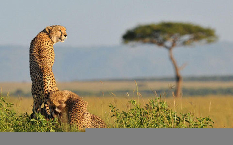 8 Days Savanna Adventure Safari in Kenya