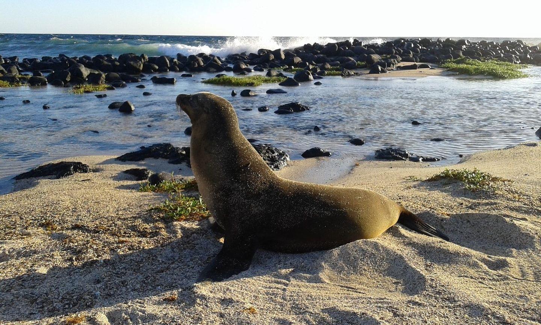 Galápagos Santa Cruz 5D/4N
