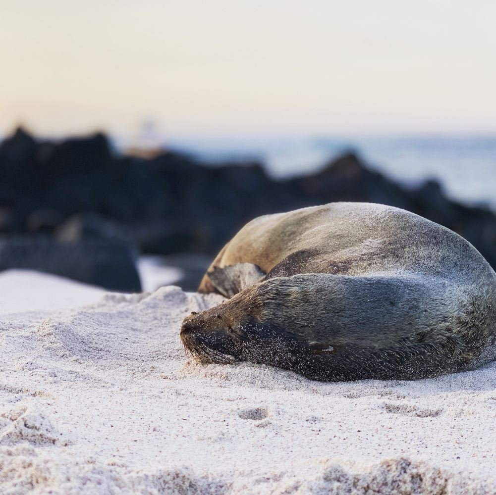 Daily Tours on Galapagos