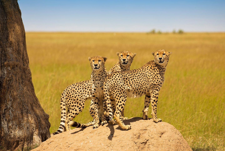 3 Days Amazing Camping Safari