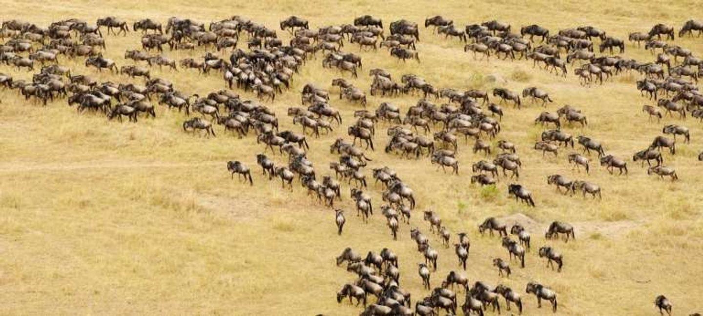 5 Days Tanzania Serengeti Migration Safari