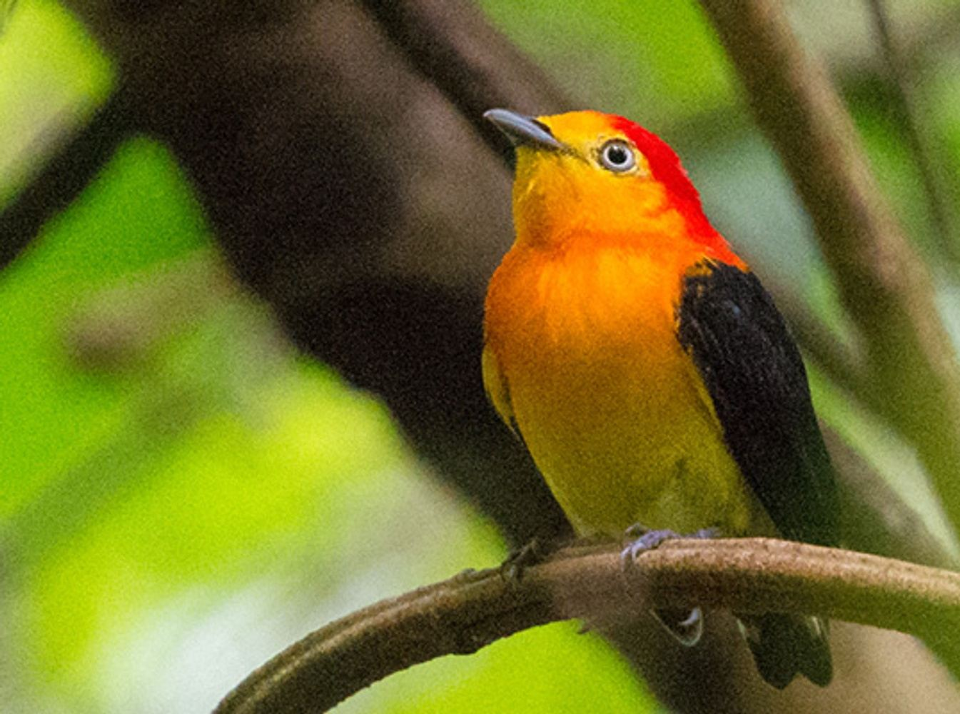 Southern Peru Birding Tour: Amazonian Lowlands and Tambopata River