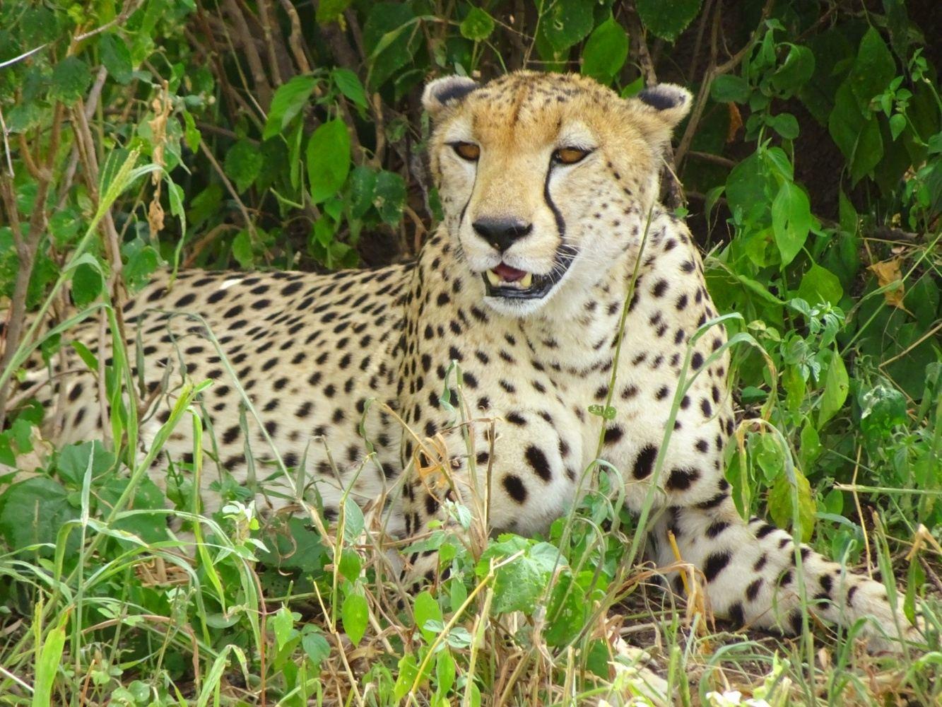 7 days Best of Tanzania Safaris