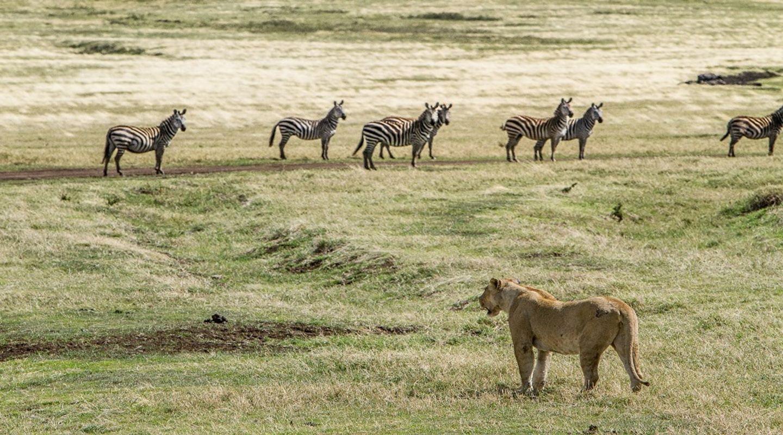 2 DAYS;Tanzania Safari In Ngorongoro &Tarangire National Park