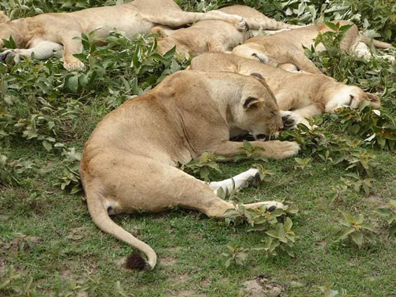 3-Days Custom Made Luxury Safari- Serengeti & Ngorongoro