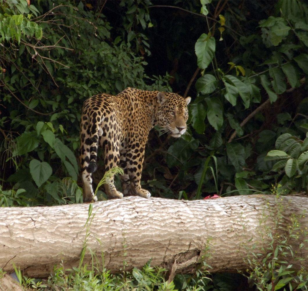 Manu Nature & Wildlife Escape 7 Days