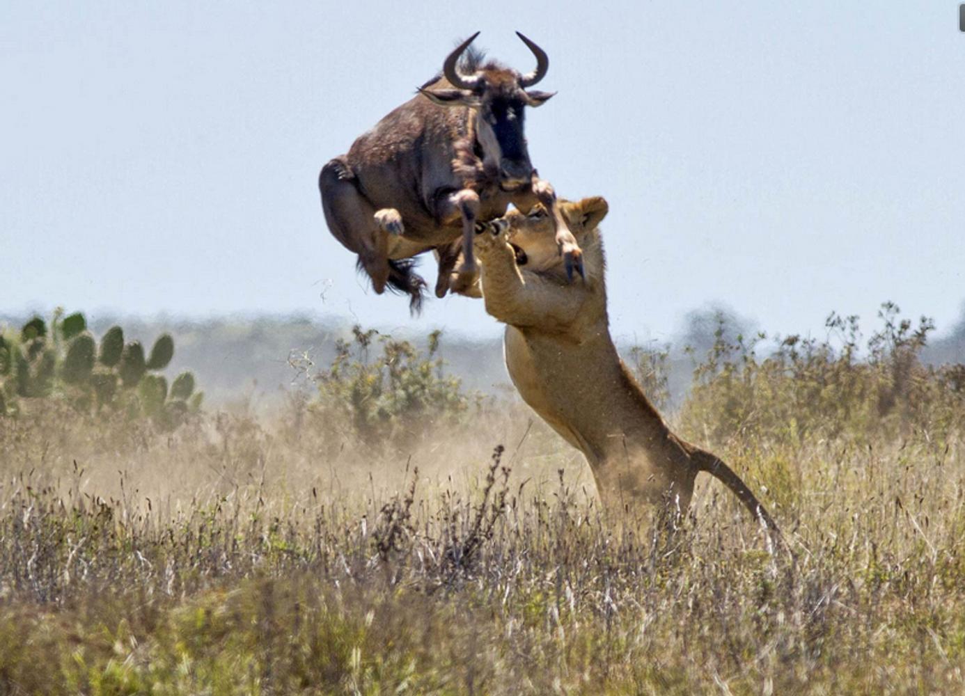 7 days Masai Mara lake nakuru amboseli safari