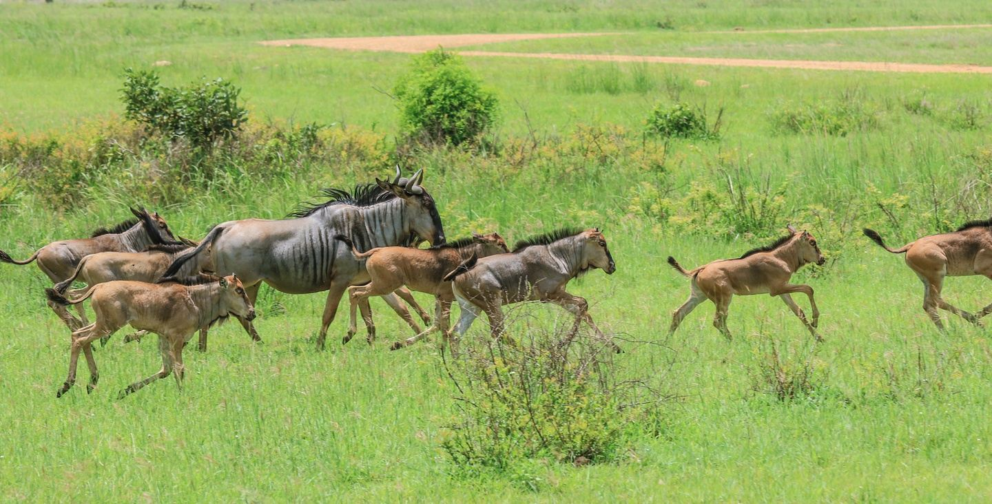 10 DAYS TANZANIA SAFARI EXPEDITION - ONE TIME DEAL TO GRAB.