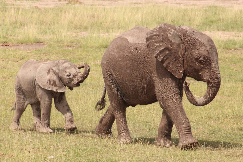 DEC. 2020 Big Elephant Magic Kenya (Code BEMK1220A)
