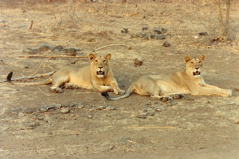 Gujarat Historic Places & Wildlife Safari Tour