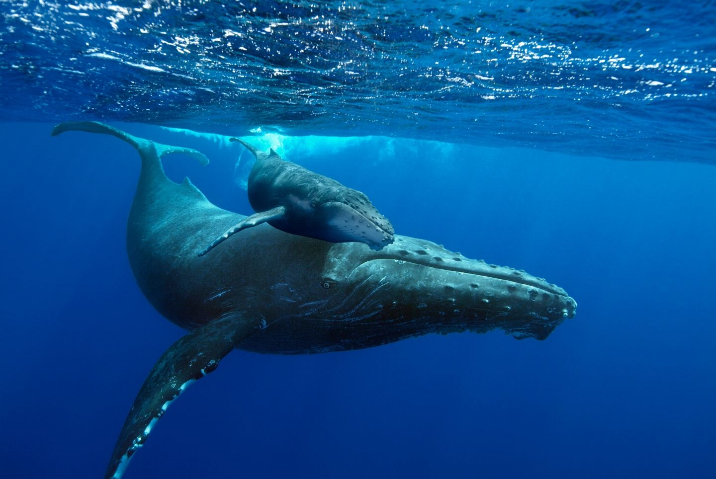 A Valentine's Dolphin, Whale, Yoga and Chanting Retreat in Hawaii