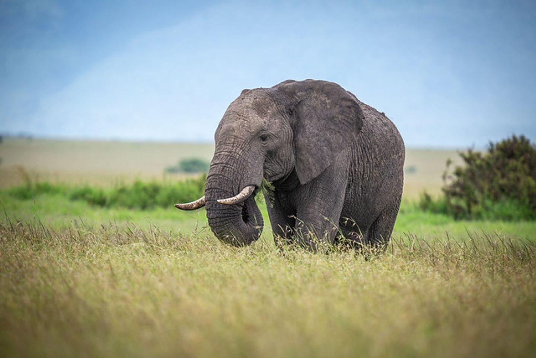 11 Day Kenya and Tanzania Luxury Safari