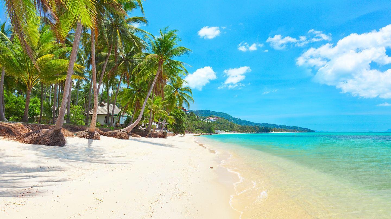 Wild Heart Thailand Yoga Retreat