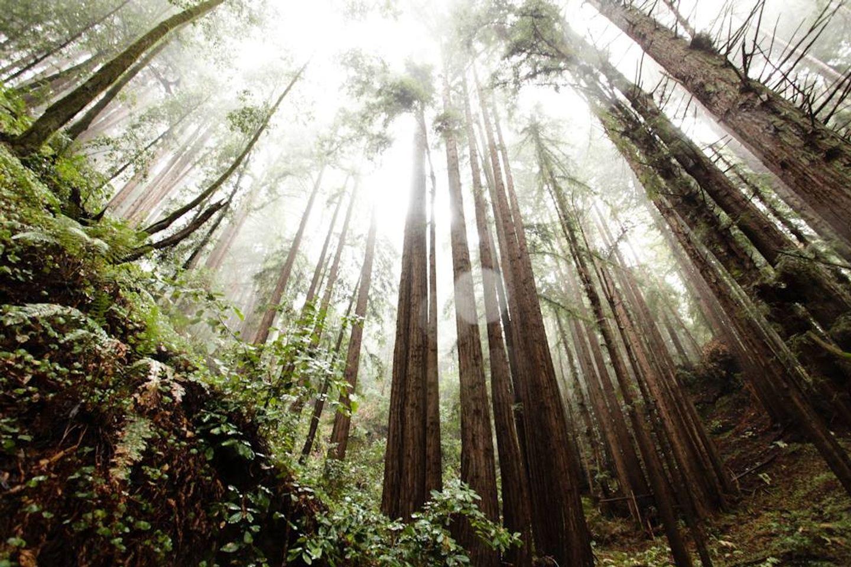 Redwood Yoga and Meditation Retreat