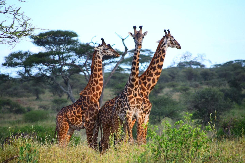 1 DAY TANZANIA JOINING (SHARING) SAFARIS