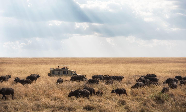 7 Day Epic Tanzania Camping Safari